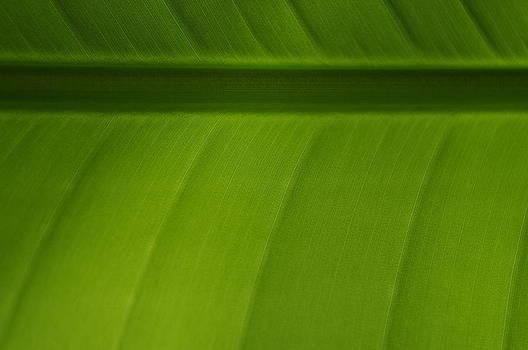 Banana Leaf by Debbie De Haas Cato