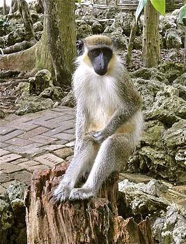 Jennifer Lamanca Kaufman - Barbados Monkey