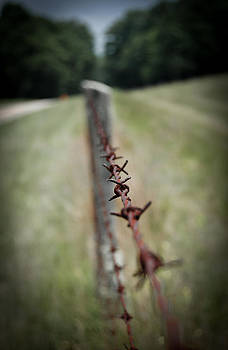 Barbed Wire Fence by Swift Family