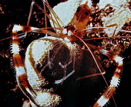 Bill Owen - Barbershop Shrimp
