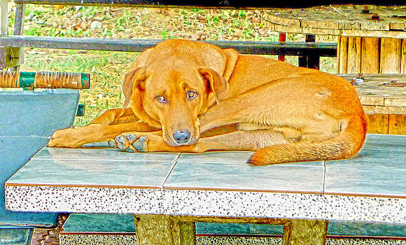 Roy Foos - Bark Bark Art