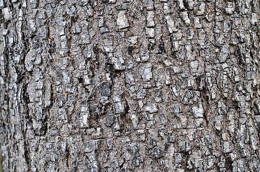 Bark of Pine Tree by Nittaya Tungsupatawat