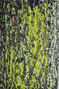 Bark by Ryan Louis Maccione
