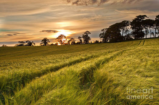 Barley Field Sunset by Derek Smyth