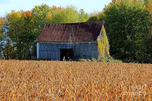 Sophie Vigneault - Barn on corn field