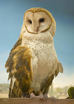 Barn Owl by Kenneth Hadlock