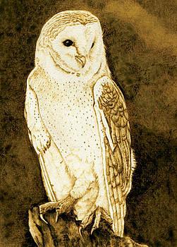 Barn Owl Portrait No.2 by Cate McCauley
