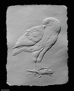 Barn Owl by Suhas Tavkar