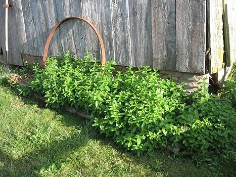 Barn Spearmint Patch by Deb Martin-Webster