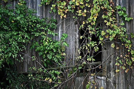 Barn Window Vine by Frank Morales Jr