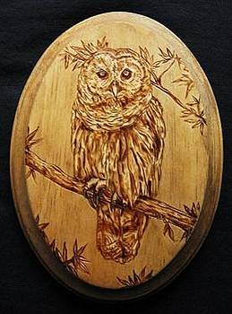 Barred Owl by Bob Renaud