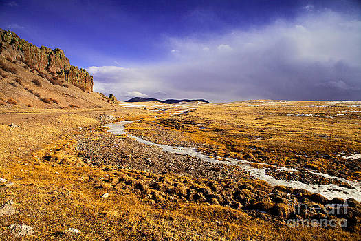 Barren Beauty by Barbara Schultheis