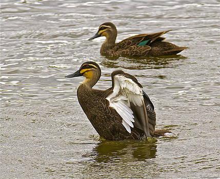 BATHTIME. Gotta be clean for a ducky date. by Michael Clarke JP