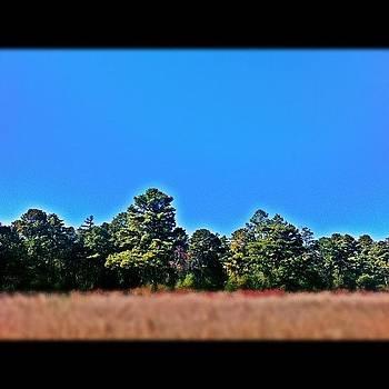 #batsto #batstonj #pinebarrens #field by Matthew Loving