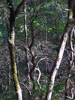 Angela Hansen - Battles in the Forest