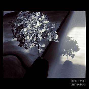 Be Still by Trish Hale