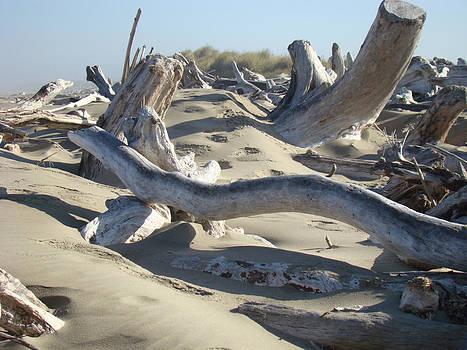 Baslee Troutman - Beach Driftwood art prints Coastal Sand Dunes Shore
