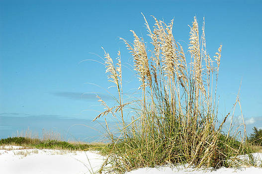 Carol Vanselow - beach grass