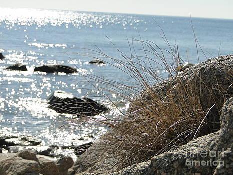 Beach Grass by Corrie McDermott