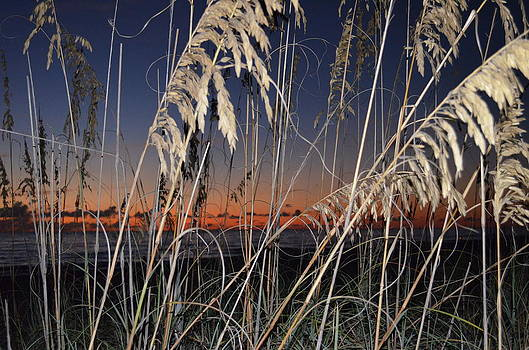 Beach grass by Susan McNamara