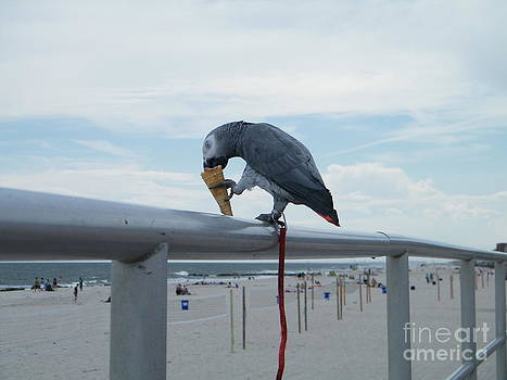 Beach it Parot by Laurence Oliver