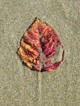 Beach Leaf by Pamela Turner