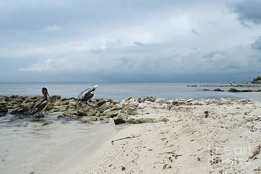 Beach Storm by Anna Crowder