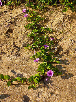 Patti Colston - Beach Trails
