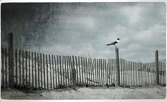 Beached Seagull by Misty Blankenship