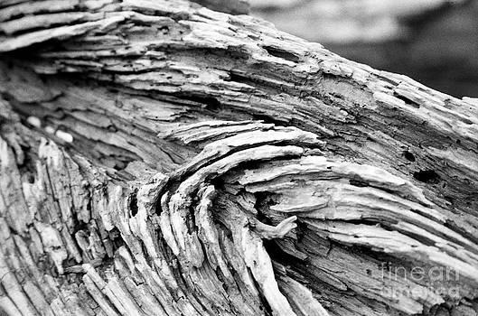 Beachwood by James Thomas