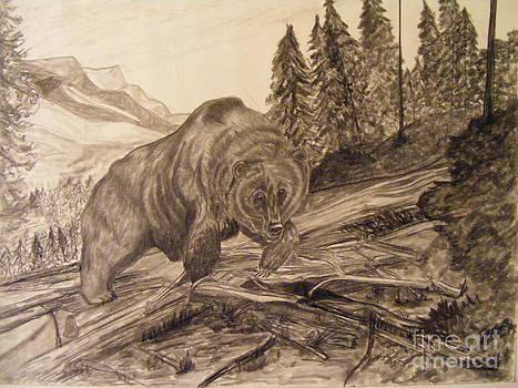 Bear in Woods by Mathew Caplan