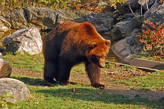 Michelle Cruz - Bear Stroll