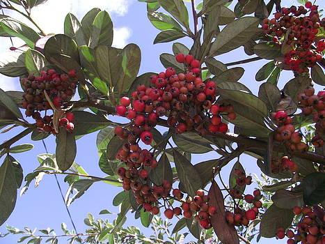 Bearing Fruit by Rani De Leeuw
