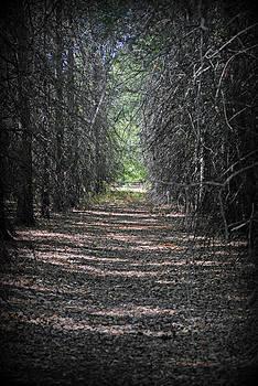 Beaten Trail 2 by Kimberly Harrison