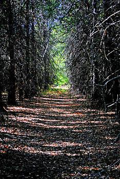 Beaten Trail 4 by Kimberly Harrison