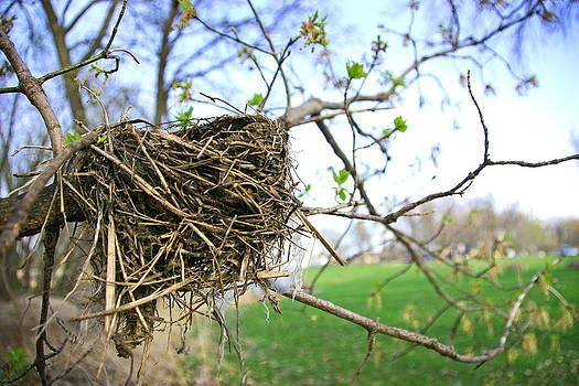Beautiful Birds Nest by Johanna Lillie