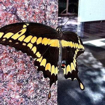 #beautiful #butterfly #downtown #austin by Amanda Max