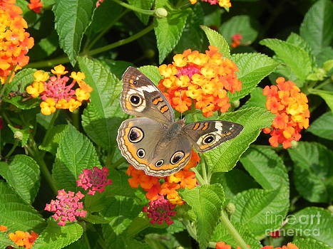 Beautiful Butterfly by Sandy Owens