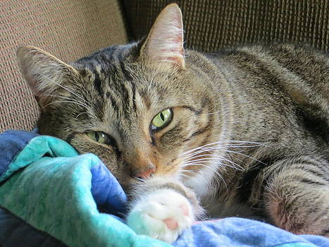 Beautiful Cat by Pamela Turner