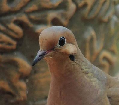 Amalia Jonas - Beautiful  Dove