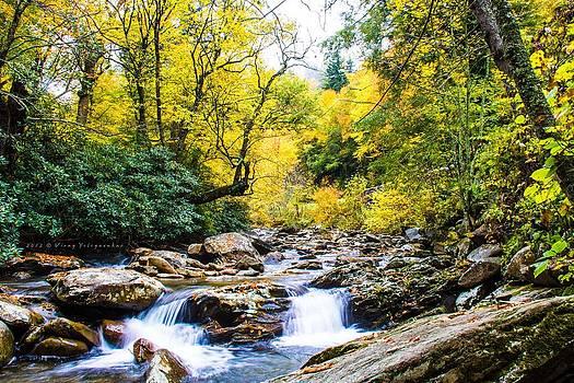 Beautiful Fall by Virag Yelegaonkar