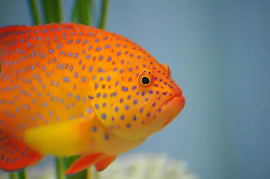 Beautiful Fish by Michael Krahl