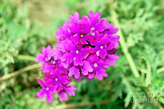 Beautiful Flower by Denis Shah