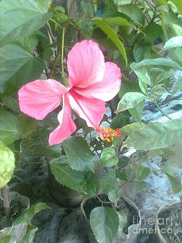 Beautiful Flower by Sajjatul Islam