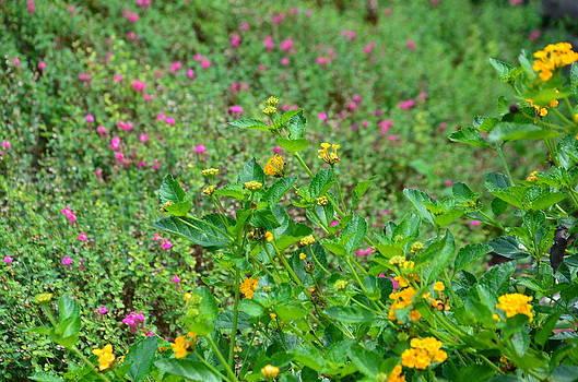 Beautiful Flowers by Kathy Lewis