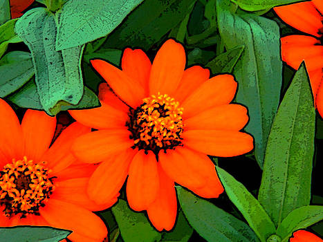 Beautiful Flowers by Patricia Erwin