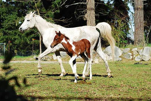 Beautiful Horses by Wanda Jesfield