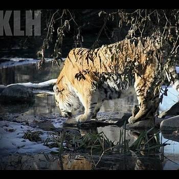 #beautiful #nature #animals #animal by Krista Hudson