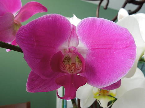 Beautiful Orchid by Mario Fabian