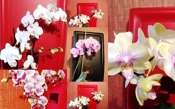 Beautiful orchids by Kovats Daniela